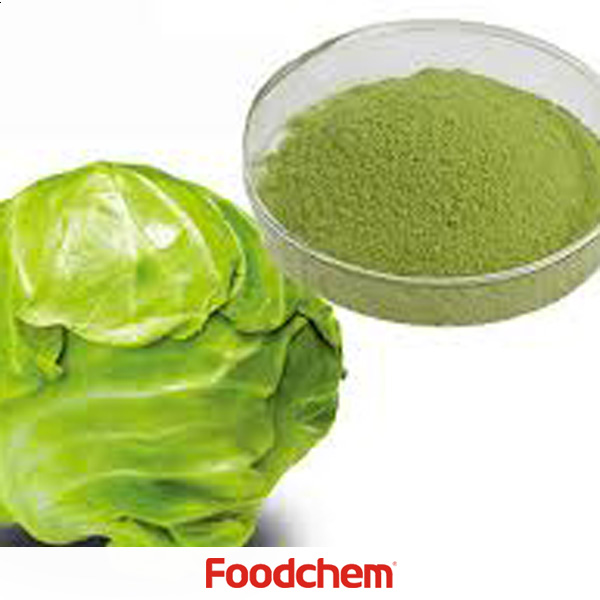 Cabbage Powder suppliers