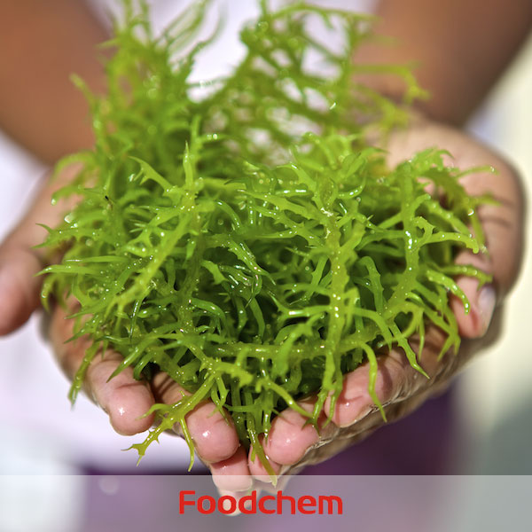 Carrageenan Foodgel2100(Type A) suppliers