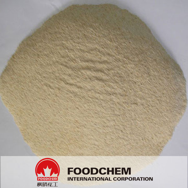 vital wheat gluten protein Manufacturers and Suppliers, buy